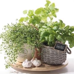 Obrúsky PAW L 33x33cm Flavor of Herbs